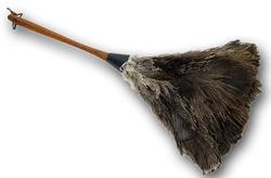 Pölyhuiska puuvarrella strutsinsulka